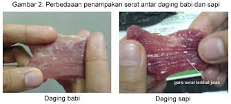 beda-daging2